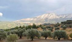 Attaviros med sina 1.215 meter är det högsta berget på Rhodos. Berget har flera betydande växtarter vilka är viktiga för rådjuret Dama-Dama också kallat...