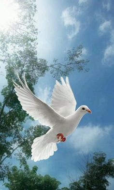 Photo about White dove flying on sky with trees behind. Image of peace, cloud, nature - 8877998 Pretty Birds, Beautiful Birds, Beautiful Images, Animals Beautiful, Cute Animals, Images Of Peace, Dove Flying, Dove Pictures, Dove Images
