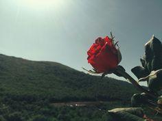 #doğa #kırmızı # bahar #gül Fotoğrafçılık