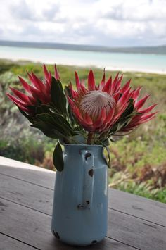 Love the South African Protea's for any function. Protea Art, Protea Bouquet, Protea Flower, My Flower, Flower Art, Bouquets, Flowers Nature, Exotic Flowers, Beautiful Flowers