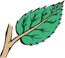 ¿Qué es la planta?: Un ser vivo LA PLANTA.