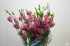 Lysianthus rosa