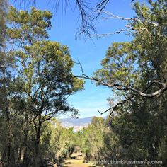 Gordons Hill Nature Recreation Area ~ #Hobart #Tasmania #walking Article and photo for think-tasmania.com