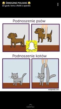 Funny Memes, Hilarious, Warrior Cats, Good Mood, Haha, Comedy, Funny Pictures, Geek Stuff, Family Guy