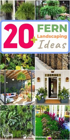Are you bored with all the cliche landscaping ideas? Take a look at my fern landscaping ideas for inspiration and give your garden a new look. #fern #backyardGarden #garden #gardening #backyardLandscaping #backyardLandscapingIdeas #landscaping #cheapLandscapingIdeas #landscape #curbAppeal #outdoorliving Ferns Garden, Garden Paths, Cheap Landscaping Ideas, Backyard Landscaping, Outdoor Plants, Outdoor Gardens, Types Of Ferns, Shade Plants, Hanging Planters