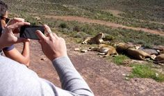 Aquila Private Game Reserve is an easy day's outing from Cape Town where you can see the Big Five.