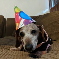 Dachshund Breed, Wire Haired Dachshund, Dachshunds, Doggies, Best Puppy Food, Best Puppies, The Perfect Dog, 14th Birthday, Unique Animals