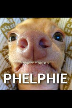 Phteven doeph a Phelphie.