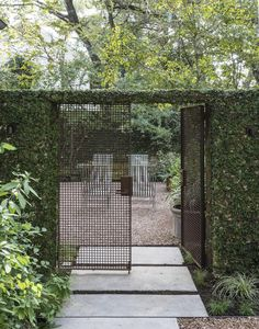 Contemporary classic landscaping combination - contemporary iron gate, green walls & concrete pavers
