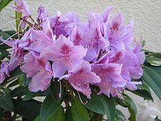 Names of All Flowers All Flowers, Delphinium, Gerbera Daisy, Primroses, Bellis Perennis, Flowers, Orchidaceae, Zinnias, Dianthus Caryophyllus