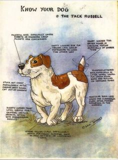 #1 Jack Russell Terrier