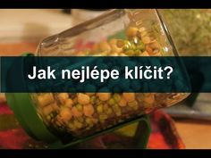 (6) Jak nejlépe klíčit? Klíčkový seriál 3. díl I Síla pro život - YouTube Sprouts, Cucumber, Youtube, Vegan, Vegetables, Food, Diet, Essen, Vegetable Recipes