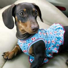 I just can't seem to get enough of dachshunds!