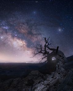 Long Exposure Landscape Photography by Troy-Anthony Saunders 繁星點點,老樹三倆。 Under The Stars, Long Exposure, Milky Way, Stargazing, Landscape Photography, San Diego, Northern Lights, Earth, Explore