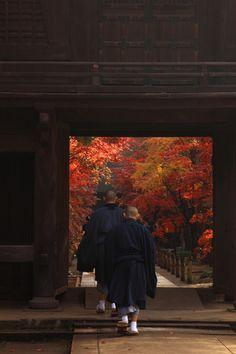 別世界へ | 街並み・建物 > 神社・寺・教会の写真 - Fall, temple Japan