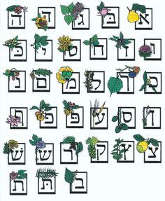 Jewish Herbal Alphabet