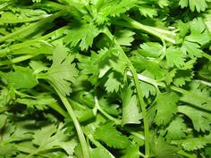 Top 12 Healing Benefits of Cilantro with Cleansing Detox Recipes. Cilantro is not just a herb for enhancing your culinary dishes. Cilantro has stunning health benefits. Coriander Seeds, Coriander Cilantro, Parsley, Growing Coriander, Coriander Powder, Fresh Coriander, Gallo Pinto, Heavy Metal Detox, Medicinal Plants