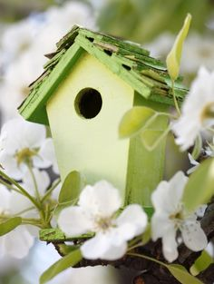 """A Spring Cottage"" Spring Has Sprung, Summer Diy, Spring Green, Shades Of Green, Beautiful Birds, Bird Houses, Bird Feeders, Green Colors, Outdoor Decor"