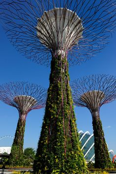 Tree-Like vertical gardens @ Singapore Gardens by the Bay by Wilkinson Eyre Architects
