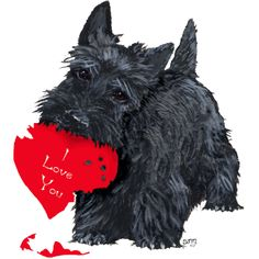 Scottie Valentines