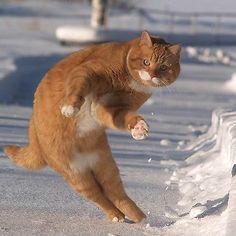 Iz dodge snow balz