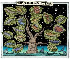 Shark Family Tree (revised), 2013, by Ray Troll