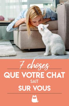 ah bon ? Orange Kittens, Cats And Kittens, Mama Cat, Cat People, All About Cats, Cat Life, Cat Day, Aristocats, Animals And Pets