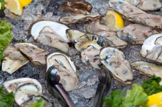 Oysters - Harris Crab House Crab House, Island, Oysters, Maryland, Beach House, Inspiration, Blog, Block Island, Beach Homes