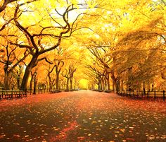 Autumn Central Park - Manhattan, NY - fav place in the world to just lay out on a blank
