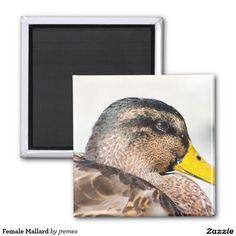 Female Mallard Square Magnet