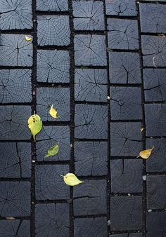 Charred wood walkway