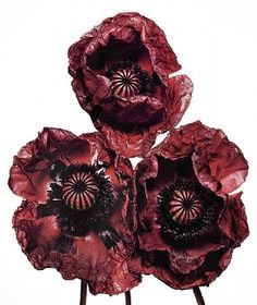 Three Poppies Arab Chief New York 1969 Irving Penn