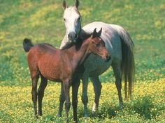 Una had her foal! His name is remie and he is big and strong and will look a lot like his daddy,Alec.