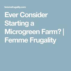 Ever Consider Starting a Microgreen Farm?   Femme Frugality