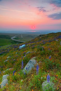 California Wildflowers by A Western Lens on 500px
