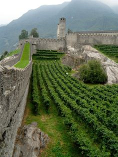 Castelgrande Vineyards and Fortified Walls, Bellinzona, Switzerland | Lisa S. Engelbrecht