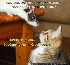 - Слышал, хозяева кота собирались  завести. Эт-ты чтоль - кот? - Я точно не знаю...  Вообще-то меня К...