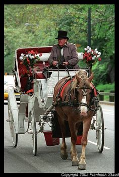 Take a carriage ride in Central Park, New York Hors Carriag, Parks, New York Carriage Ride, Carriage Rides, Horsedrawn Carriag, Carriag Ride, Nyc Carriage Ride, Carriage Ride In Central Park, Carriage Ride Central Park