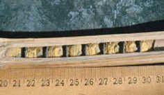 гнездовая трубка в разрезе с пыльцой и яйцами осмии