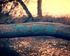 Never give up, inspiring photograph, Fine art print, 8 x 10, 5 x 7, 11 x 14, sunset, typographic photography, graffiti, shallow focus