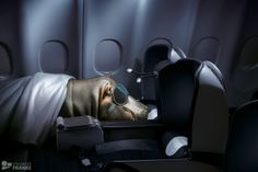 Experts Fly The South African Way by Staudinger + Franke , via Behance