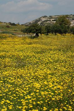 Cypriot Meadow by Holfo