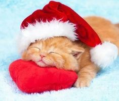 Adorable Christmas Kitten Wearing Santa Hat Snuggles Down to Nap on Cushy Red-Heart Pillow. Christmas Kitten, Christmas Animals, Merry Christmas, Funny Christmas, Cute Kittens, Cats And Kittens, Cats Bus, I Love Cats, Crazy Cats