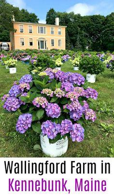 Wallingford Farm in Kennebunk, Maine - One Hundred Dollars a Month Kennebunk Maine, Dried Flowers, Compost, Bird Houses, Vegetable Garden, Gardening Tips, Perennials, Hydrangeas, Seeds