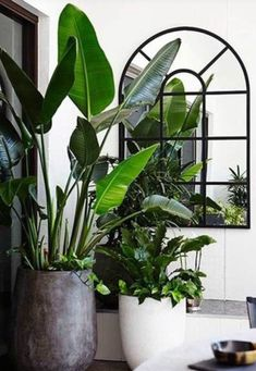 Oversized planters and mirror
