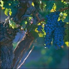 California | Wine Country Travel | Dining and Travel | Wine Spectator