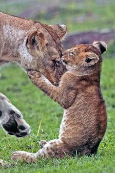 Bear hug, lion style