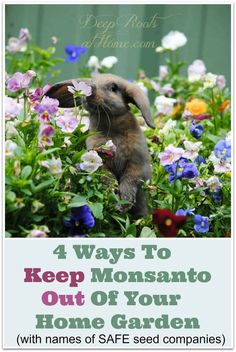 Ways To Keep Monsanto Out Of Your Home Garden 4 Ways To Keep Monsanto Out Of Your Home Garden. Find out which companies are not ties to Monsanto. 4 Ways To Keep Monsanto Out Of Your Home Garden. Find out which companies are not ties to Monsanto. Organic Vegetables, Growing Vegetables, Gardening Vegetables, Organic Fruit, Organic Seeds, Home Vegetable Garden, Home And Garden, Garden Art, Garden Modern