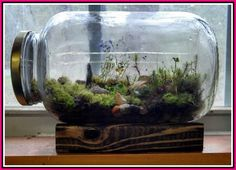 One way is to display the terrarium. The terrarium is a small garden in a glass container. Mini Terrarium, Succulent Terrarium, Succulents Garden, Planting Flowers, Terrarium Wedding, Water Terrarium, Terrarium Closed, Fairy Terrarium, Indoor Garden