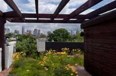 Living Walls, Green #Roofs, and the Heat Island Effect